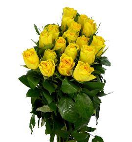 Rosa hol solero 60 - RGRSOLE