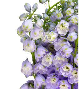 Delph magic lavender 60 - DELMAGLAV