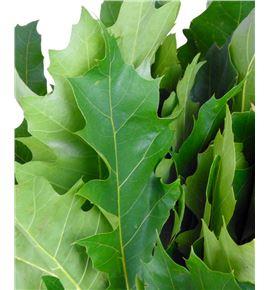 Quercus natural - QUENAT