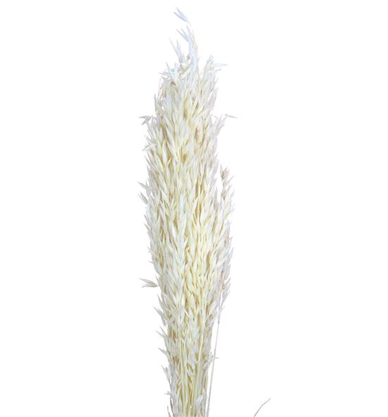 Avena seca blanca - AVESECBLA
