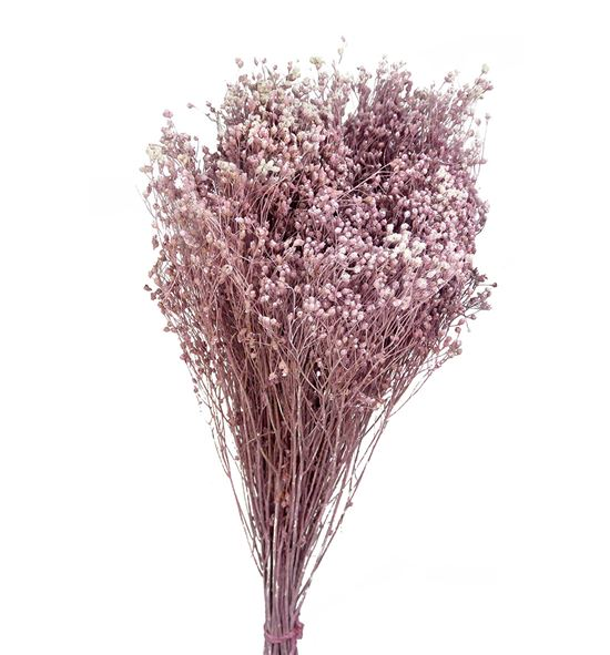 Broom bloom seco rosa claro - BROSECROS