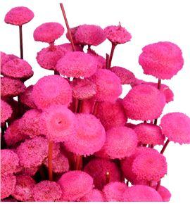 Botao seco rosa - BOTSECROS