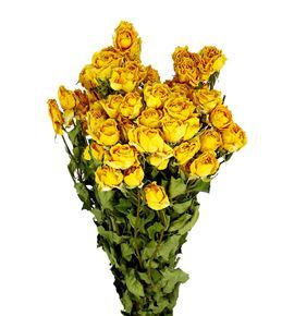 Rosa ramificada seca amarilla - ROSRAMAMA