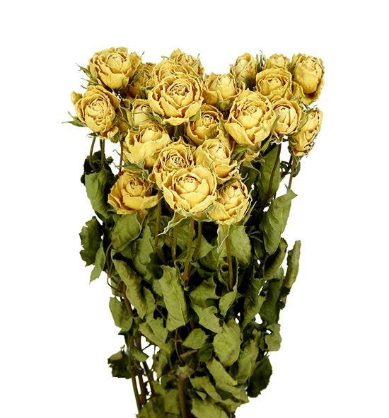 Rosa ramificada seca blanco - ROSRAMBLA