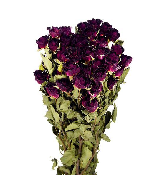 Rosa ramificada seca roja - ROSRAMROJ