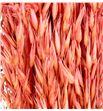 Avena seca rosa - AVESECROSOSC1