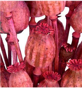 Papaver seco rosa - PAPSECROSOSC