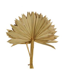 Palmito sun natural - PALSUN