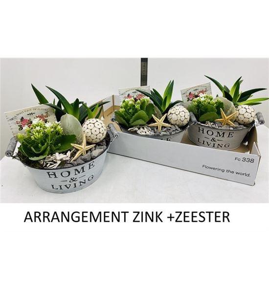 Pl. composicion planta interior 30cm x3 - COMPLAINT33023