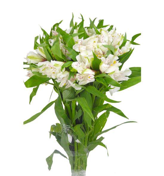 Alstroemeria selec blanca - ALSEBLA