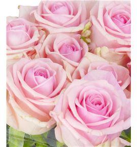 Rosa hol heaven 50 - RGRHEA
