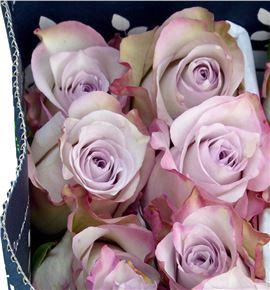 Rosa col deep silver 40 - RCDEESIL