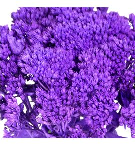 Sedum teñido lila 60 - SEDLIL