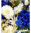 Bqt fantasy azul claro preservado/seco - BQTFANAZUCLA1