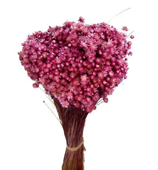 Marcela seca rosa - MARSECROS