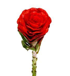 Brassica teñido rojo 60 x5 - BRATINROJ