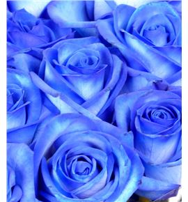 Rosa hol. azul 80 - RGRAZU