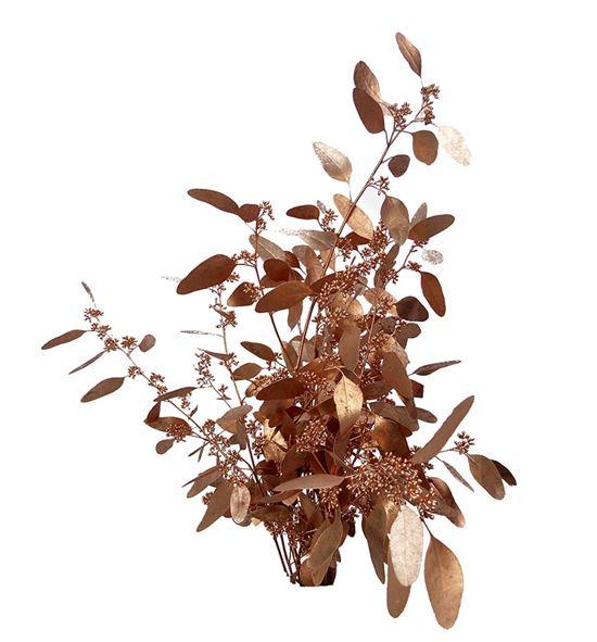 Eucaliptus populus cobre a2 - EUPOPCOB
