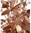 Eucaliptus populus cobre a2 - EUPOPCOB1