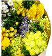 Bqt fantasy yellow mini preservado/seco - BQTFANYEL1