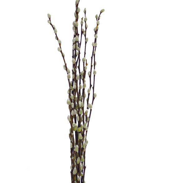 Salix snow flake 150 - SALIXGATE