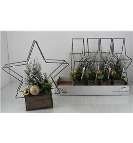 Pl. composicion planta navidad 40cm x5 - COMPLANAV54025