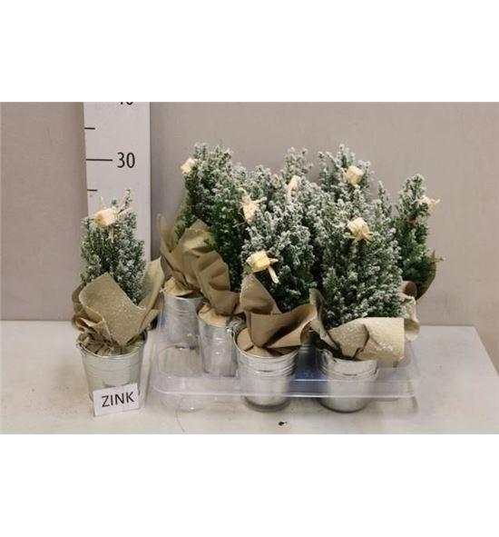 Pl. composicion planta navidad 25cm x9 - COMPLANAV9259