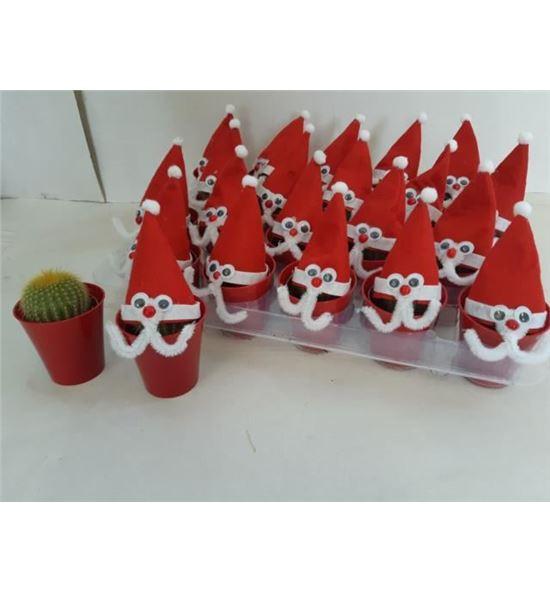 Pl. cactus kerstman x20 10cm - CACKER20510