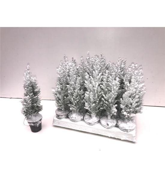 Pl. chameacyparis nieve 20cm x20 - CHANIE2050520