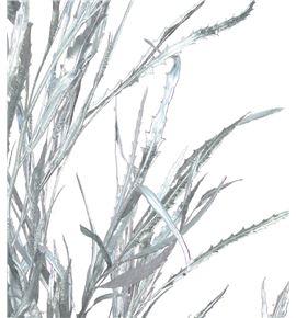 Grevillea plata - GREPLA