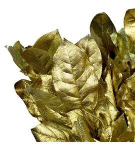 Salal tips oro - SALTIPORO
