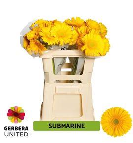 Gerbera submarine 50 x10 - GERSUB5010