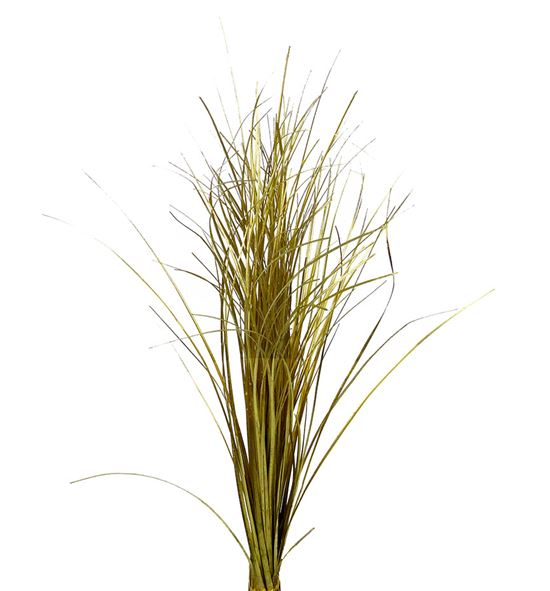 Beargrass oro - BEAORO