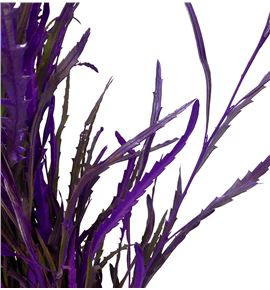 Grevillea lila - GRELIL