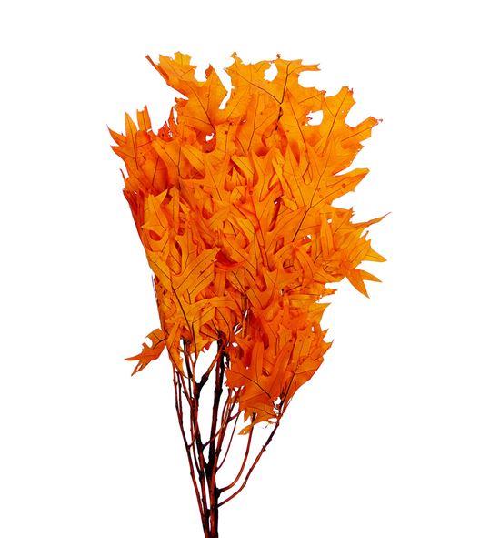 Querqus preservado naranja - QUEPRENAR