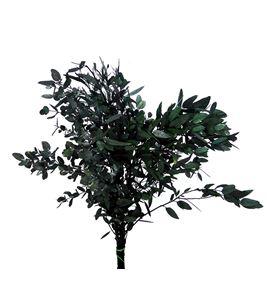 Eucaliptus preservado gunnii - EUCPREGUN