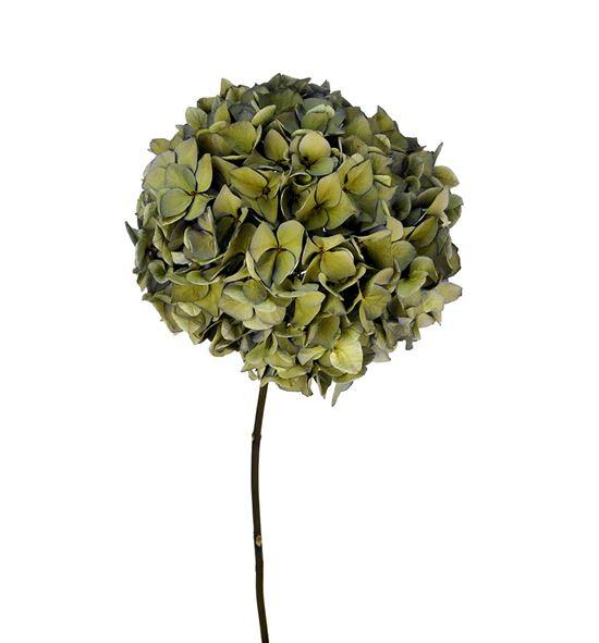 Hydrangea seca azul/verde - HYDSECAZUVER