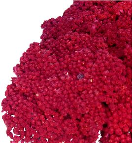 Achilea seca roja - ACHSECROJ