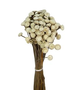 Botao seco natural - BOTSECNAT
