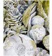 Indian mix blanco purpurina dorada x40 - INDBLAPURORO1