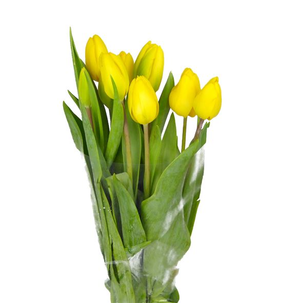 Tulipan strong gold 38 - TULJANVAN
