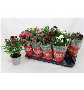 Pl. rosa mixto 25cm x10 - ROSMIX101225