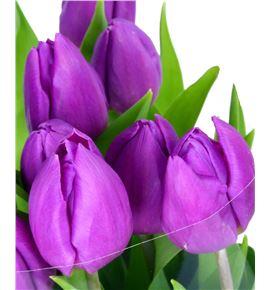 Tulipan purple prince 38 - TULPURPRI