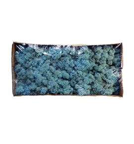 Musgo preservado polar azul claro - MUSPREAZUCLA