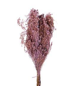 Broom bloom seco lila claro - BROSECLILCLA