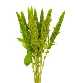 Amaranthus verde recto 55 - AMAVER