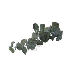 Eucaliptus baby blue preservado bbl/4103 - BBL4103-2-EUCALIPTO