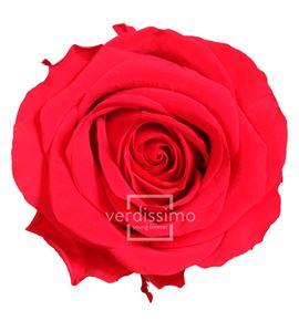 Rosa preservada premium 4 unid rsg/2200 - RSG2200-03-ROSA-PREMIUM