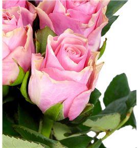 Rosa hol light pink tacazzi 50 - RGRLIGPINTAC