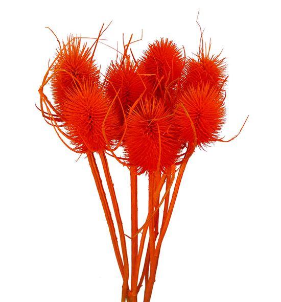 Eryng preservado naranja - ERYPRENAR